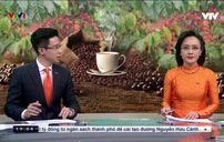 Thực tế phát triển cà phê ở Việt Nam