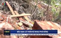 Bắc Kạn: Bí thư chi bộ, trưởng thôn cũng... phá rừng