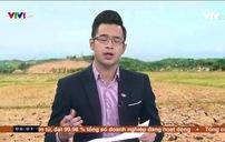 Hàng nghìn ha lúa ở Nghệ An bị khô hạn