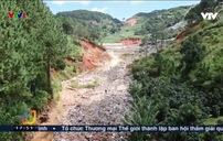 Rừng thông tại Đà Lạt bị chặt phá