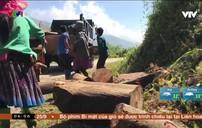 Nhiều xưởng chế biến gỗ pơ mu nằm ngay gần rừng đặc dụng Tà Xùa