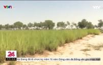 Canh tác lớn ở vùng sa mạc