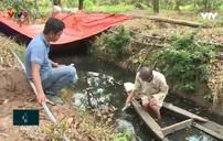 Nước mặn tấn công vùng chuyên canh sầu riêng Tiền Giang