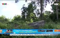 Bình Phước: Không xác định được khối lượng gỗ tiêu hủy sau xác minh