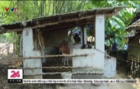 Thoát nghèo: Tưởng vui hóa ra lại khổ hơn hộ nghèo