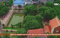 Bí ẩn cây vải tổ 200 tuổi ở Việt Nam