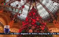 Noel năm nay sẽ vắng bóng cây thông tại Pháp?