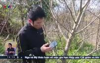 Sơn La cấp miễn phí tem truy xuất nguồn gốc đào
