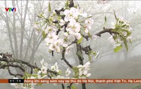 Quyến rũ mùa hoa lê ở vùng cao