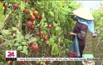 Kết nối tiêu thụ nông sản cho người dân Mê Linh, Hà Nội