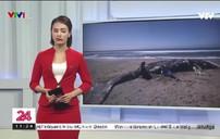 4 xác cá voi xám dạt vào bờ biển San Francisco, Mỹ