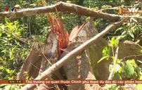 Rừng giáp ranh liên tục bị tàn phá