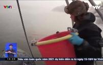 Cô gái Thụy Điển theo nghề săn hàu ngon nhất thế giới