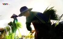 Rong ruổi đất phương Nam: Hương sắc B'Lao
