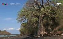 Khám phá thế giới: Thế giới các loài cây - Phần 3
