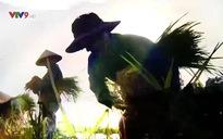 Rong ruổi đất phương Nam: Hành trình Lửa và Hoa