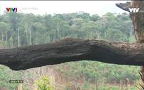 Môi trường: Ngăn chặn phá rừng ở một số vùng trọng điểm