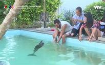 Chuyện biển chuyện người: Cứu hộ cá heo