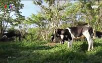 Phim tài liệu: Đi tìm chiếc chìa khóa vàng cho nông nghiệp Việt Nam
