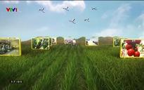 Chuyện nhà nông: Sản xuất nông nghiệp theo hướng hữu cơ