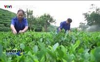 Khám phá Việt Nam: Về nơi tứ đại danh trà