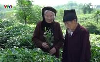 Khám phá Việt Nam: Người phủ màu xanh cho đất