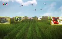 Chuyện nhà nông: Giống cây trồng và nỗi lo của nhà nông