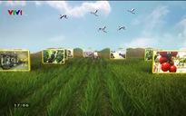 Chuyện nhà nông: Liên kết cùng phát triển
