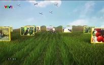 Chuyện nhà nông: Triển vọng phát triển cây Hồi tại Lạng Sơn