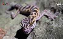 Phim tài liệu khoa học: Hệ sinh thái Quần đảo Cát Bà