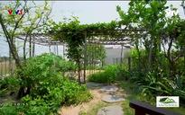 Nét xanh trong kiến trúc nay: Khu vườn xanh giữa phố Hội
