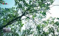 Nhịp đập Việt Nam: Món quà rừng ngập mặn