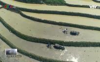 Nhịp đập Việt Nam:Vẻ đẹp mùa nước đổ