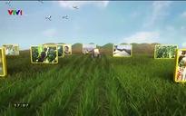 Chuyện nhà nông: Hưng Yên đẩy mạnh tiêu thụ nhãn trong mùa dịch