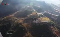 Nhịp đập Việt Nam: Màu xanh Cù lao Tắc Cậu