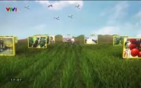 Chuyện nhà nông: Tìm hướng sản xuất và tiêu thụ nông sản trong đại dịch