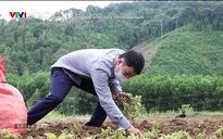 Chuyện nhà nông: Đẩy mạng liên kết tiêu thụ nông sản trong đại dịch
