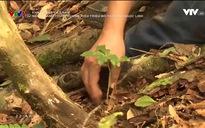Khát vọng Việt Nam: Người đánh thức thương hiệu triệu đô trên núi Ngọc Linh