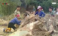 Bản tin tiếng Việt 12h VTV4 - 18/10/2017