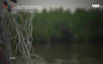 Rong ruổi đất phương Nam: Ngao du trên Đầm Bà Tường