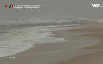 Chuyện biển chuyện người: Tiếng cây dương Mỹ Thủy