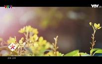 MV yêu thích: Giọt nắng bên thềm