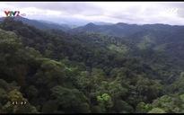 Phim tài liệu khoa học: Hệ sinh thái rừng đất thấp