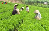 Chân dung cuộc sống: Những người nông dân hiện đại