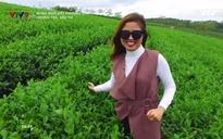 Rong ruổi đất phương Nam: Hương trà, sắc tơ