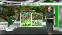 Bản tin thời tiết nông vụ - 23/4/2017