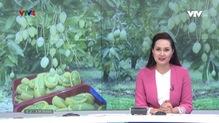 Bản tin tiếng Việt 12h VTV4 - 19/4/2019