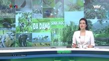 Bản tin tiếng Việt 12h VTV4 - 23/5/2019