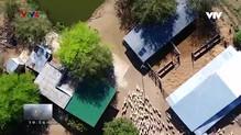 Nhịp đập Việt Nam: Đồng cừu hồ Thành Sơn