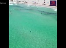 """""""Sát thủ"""" cá mập bơi áp sát giữa đám đông đang tắm biển nhưng không ai hay biết"""
